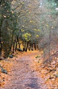 ben burr trail